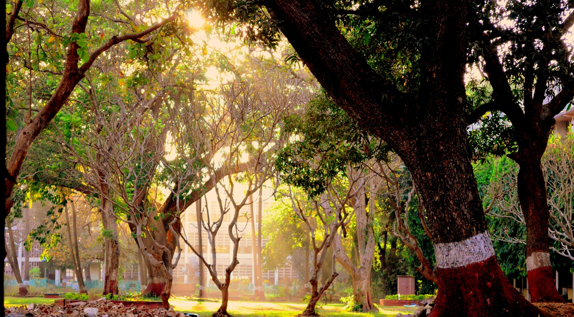 A humble sun in the city is certainly not an easy feat to find.. unless of course you are in IITB..
