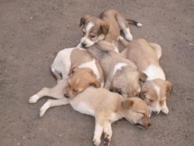 113494_Puppies_400